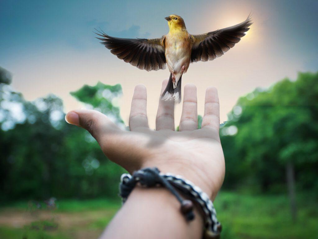 https://pixabay.com/de/photos/kreative-surreal-bildmaterial-2801970/