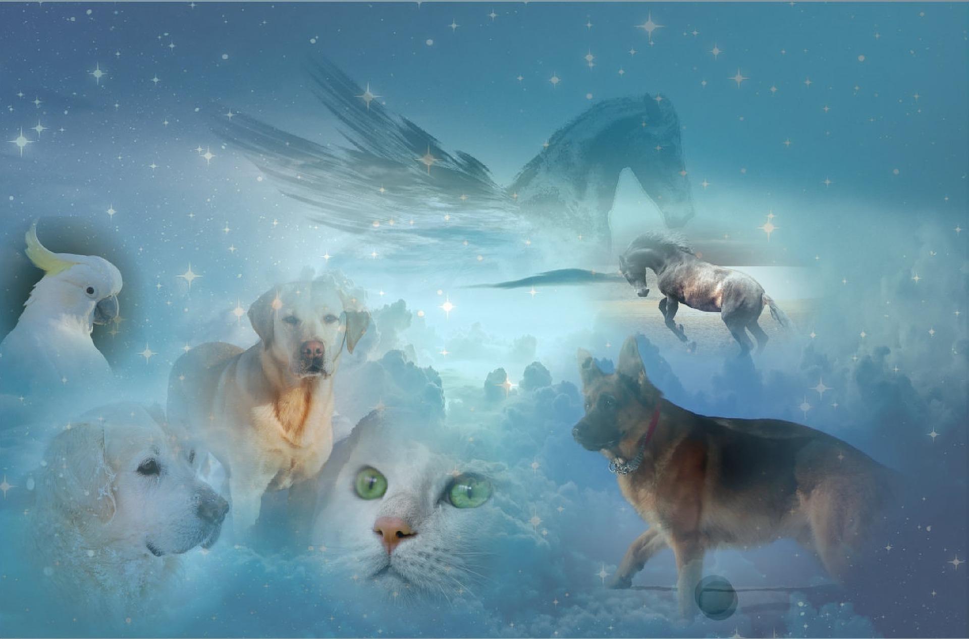 Tier sind ewig mit uns verbunden